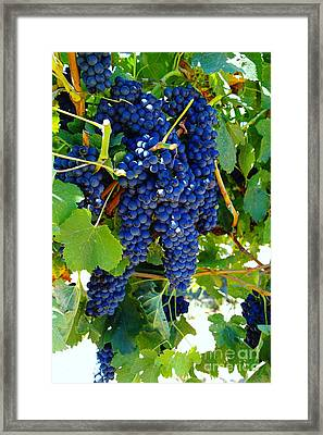 Rich On The Vine   Framed Print by Jeff Swan