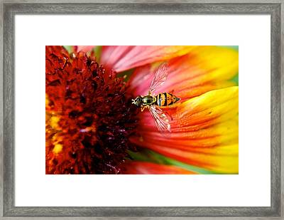 Rich Reward Framed Print by Frozen in Time Fine Art Photography