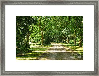 Rickety Fence Framed Print by Andrew Middleton