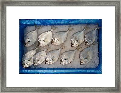 Riddle Fish Framed Print
