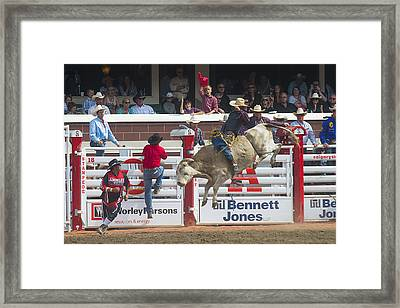 Ride Em Cowboy Framed Print by Bill Cubitt