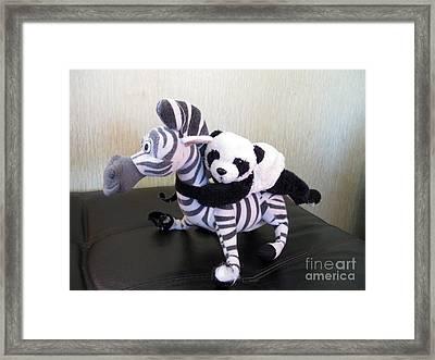Framed Print featuring the photograph Riding A Zebra.traveling Pandas Series by Ausra Huntington nee Paulauskaite