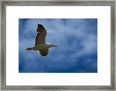 Riding The Currents Framed Print by Murray Bloom
