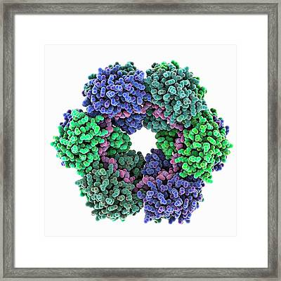 Rift Valley Fever Virus Protein And Rna Framed Print
