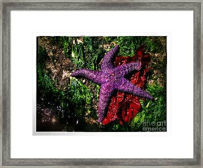 Right At Home Framed Print