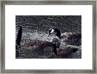 Framed Print featuring the photograph Right Behind Ya   by Lesa Fine