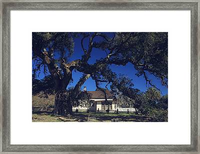 Right Outside The Window Framed Print by Laurie Search