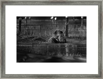 Rigors Of Training Framed Print by Mountain Dreams