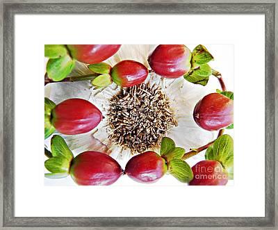Ring Around The Garlic Framed Print by Sarah Loft
