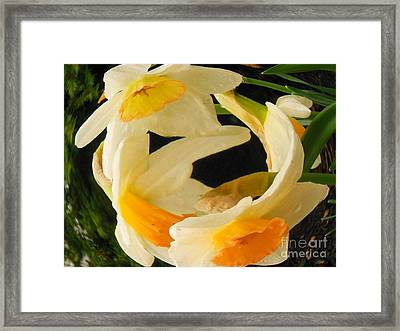 Ring Around The Rosie Framed Print by Sharon Costa