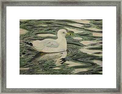 Ring Bill Seagull Framed Print by Stan Tenney