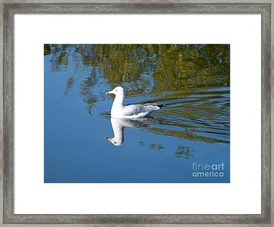 Framed Print featuring the photograph Ring-billed Gull by Ann E Robson