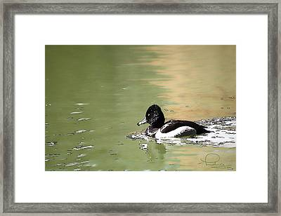 Framed Print featuring the photograph Ring-neck Duck by Ludwig Keck