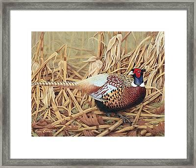 Ring-necked Pheasant Framed Print by Ken Everett
