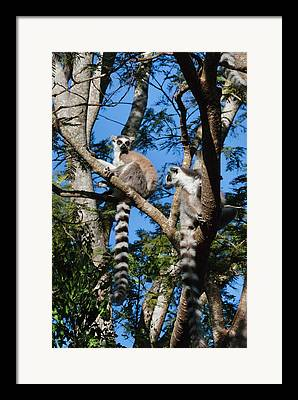 Madagascar National Park Framed Prints