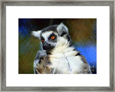 Framed Print featuring the photograph Ring-tailed Lemur by Lisa L Silva