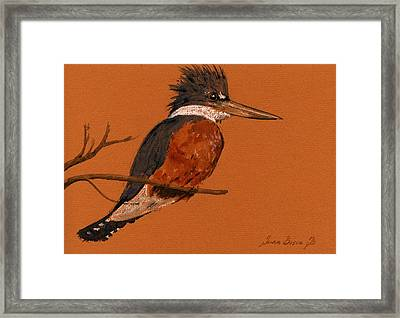 Ringed Kingfisher Bird Framed Print