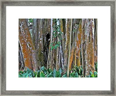 Ringling Trees 1 Framed Print by Maria Huntley
