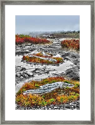 Rings Of Fire - Dolly Sods West Virginia Framed Print by Dan Carmichael