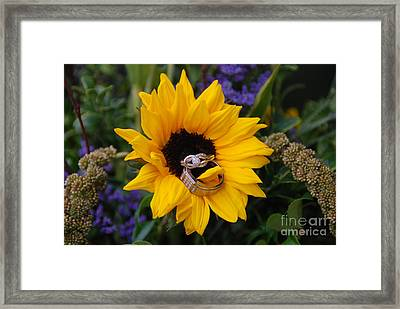 Rings On A Sunflower Framed Print