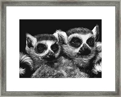 Ringtail Lemurs Framed Print by Heather Ward