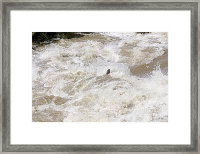 Rio Grande Kayaking Framed Print by Steven Ralser