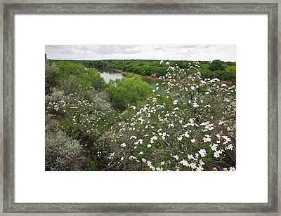 Rio Grande, South Texas Framed Print by Larry Ditto