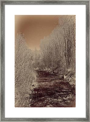Rio Taos Bosque Iv Framed Print