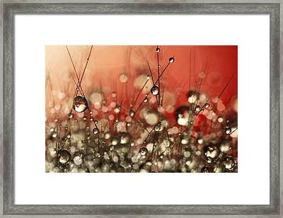 Framed Print featuring the photograph Riot Red Cactus Sparkles by Sharon Johnstone