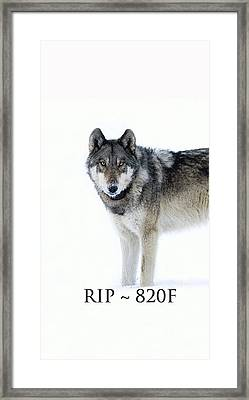 Rip 820f Framed Print