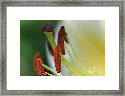 Ripe Framed Print