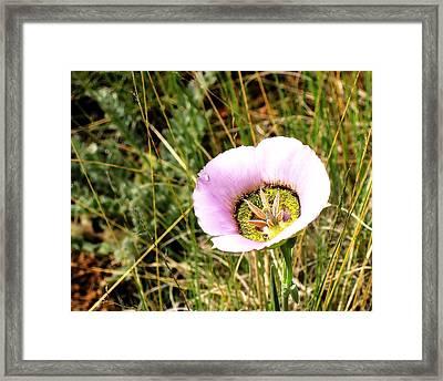 Ripe Mariposa Framed Print