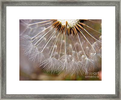Framed Print featuring the photograph Ripe To Fly by Agnieszka Ledwon