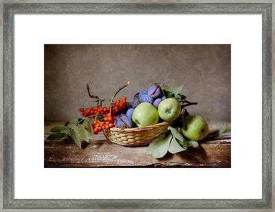Ripened Plums  Framed Print by Nikolay Panov
