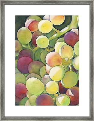 Ripening Framed Print by Sandy Haight
