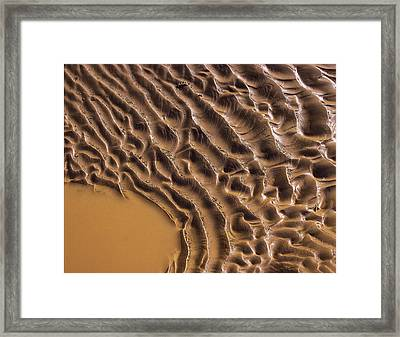 Ripples And Fins Framed Print