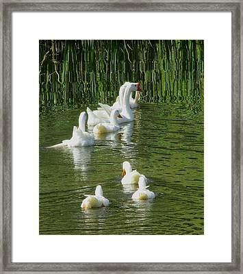 Ripples On The Pond Framed Print by Carol Hoffman