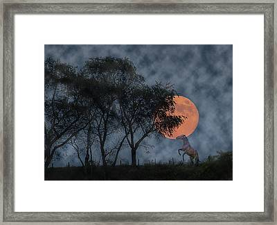 Rise Framed Print by Betsy Knapp