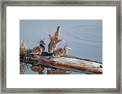 Rise N Shine Duckies Framed Print by Sharon Talson