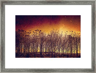 Rise Framed Print by Off The Beaten Path Photography - Andrew Alexander