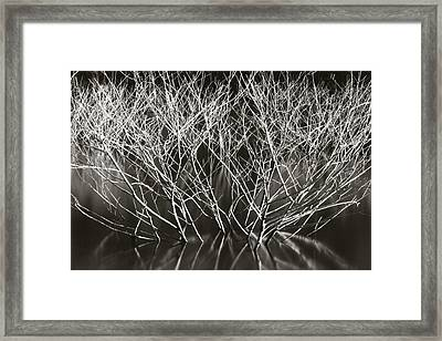 Framed Print featuring the photograph Rising by Amarildo Correa