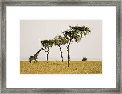 Framed Print featuring the photograph Rising by Antonio Jorge Nunes