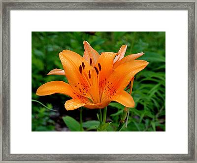 Rising Framed Print by Rodney Lee Williams