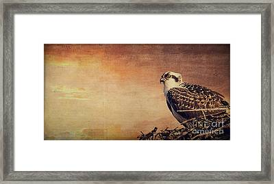 Rising Sun Framed Print by Edward Fielding