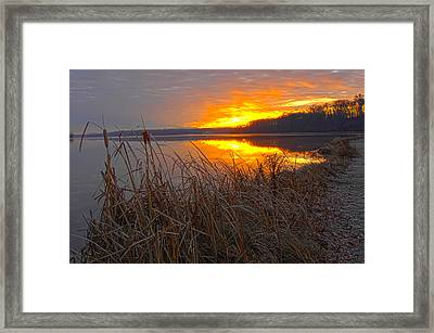 Framed Print featuring the photograph Rising Sunlights Up Shore Line Of Cattails by Randall Branham