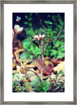 Framed Print featuring the photograph Rising Wildflower by Candice Trimble