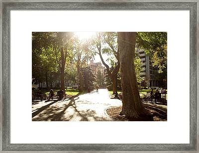 Rittenhouse In The Sun Framed Print by Christopher Woods