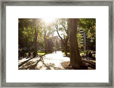 Rittenhouse In The Sun Framed Print