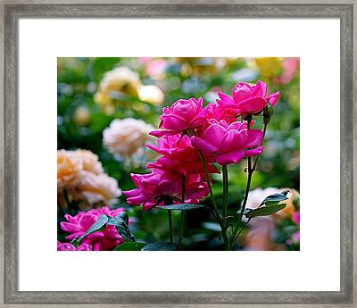 Rittenhouse Square Roses Framed Print by Rona Black