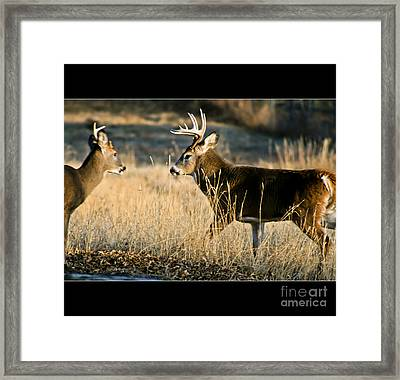 Rivals Framed Print by Stefano Carini